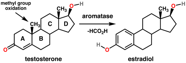 Imagen de la conversión de andrógenos en estrógenos gracias a la aromatasa