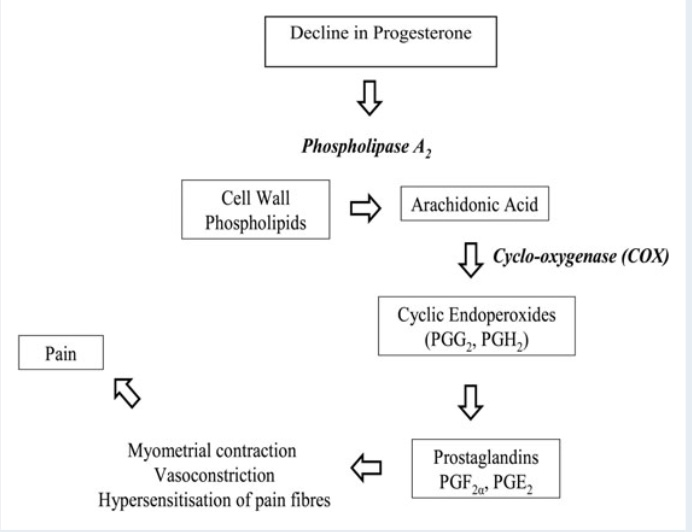 Esquema de la producción de prostaglandinas en la dismenorrea